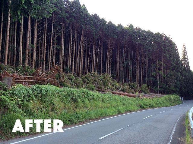 伐採作業の完了後の写真