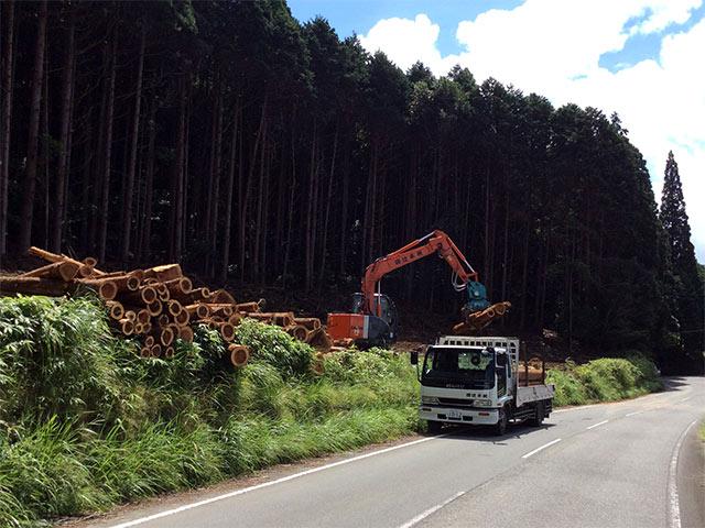 木を伐採した後、市場への搬出中の写真