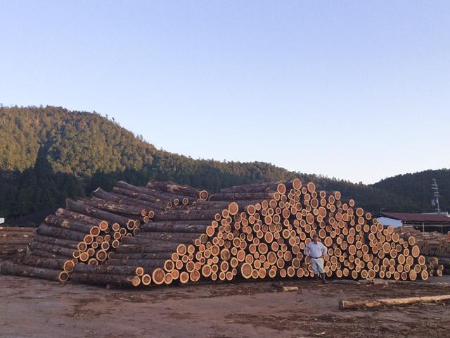 四辻木材の商品であるヒノキの木を市場で山積みに陳列