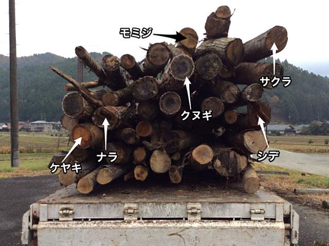 京北・美山の山に自生している木の種類