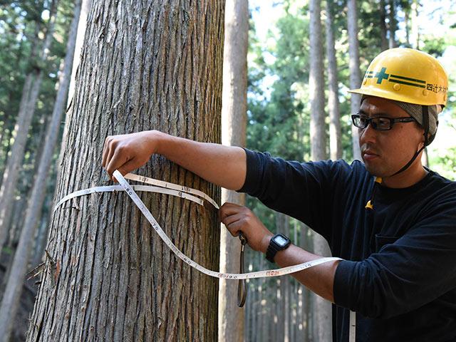 立木の調査、一本一本見積もり