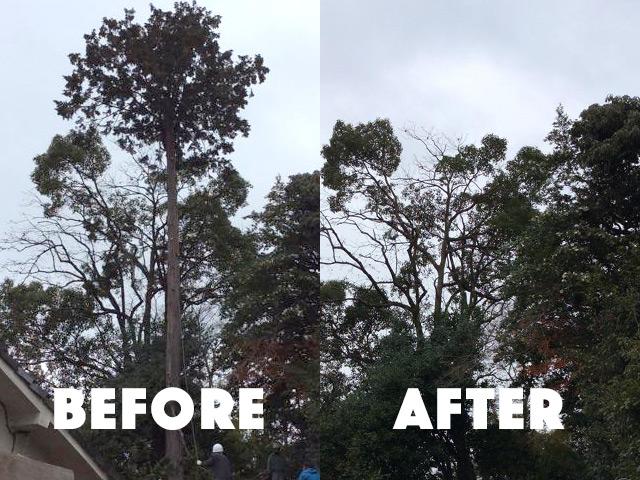 危険木伐採作業のbefore after