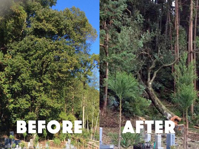 危険木伐採作業の補助