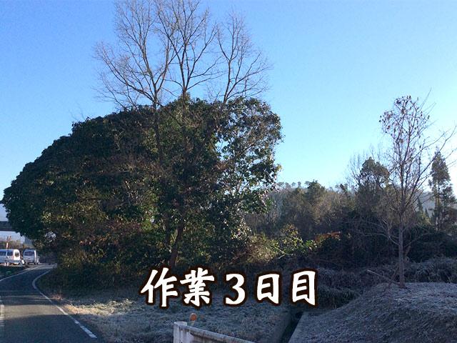 道路にはみ出す木の伐採 作業3日目