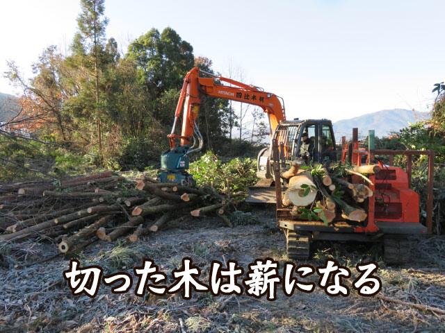 伐採した木は薪に使用される