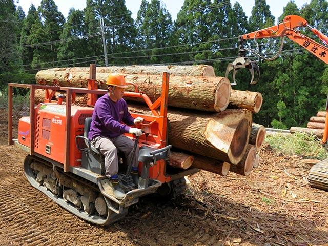 大型トラックと中型トラックで木を搬出するので、大型免許を持っている方は即戦力です。