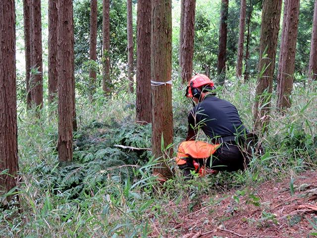 木を伐採する様子
