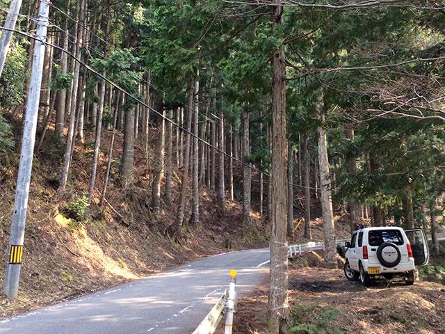 京都府南丹市美山町田歌の伐採現場