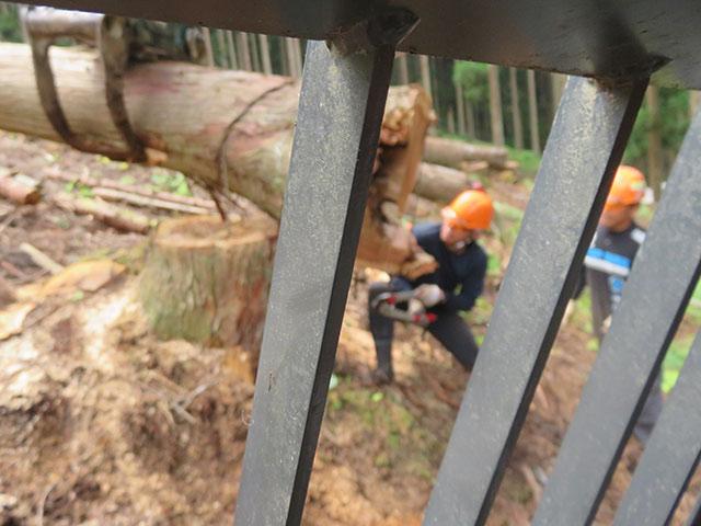 架線を設置して、山の上に伐ってある木を引っ張って出す