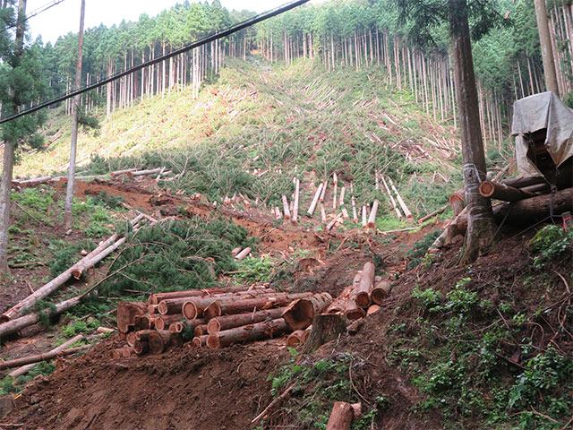 伐採現場の経過状況