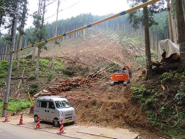 美山町の伐採現場