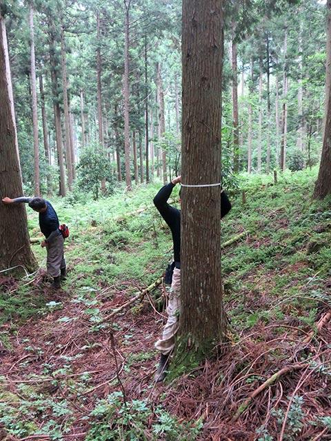 スギ、ヒノキなど木材市場で取り扱う針葉樹をお見積りします
