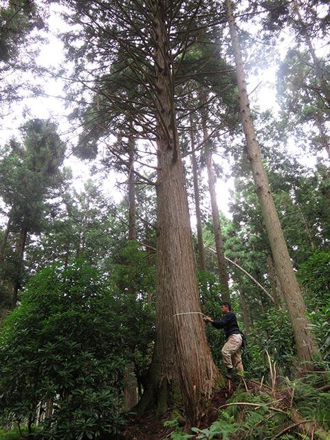 先代が、子どもたちのために植えてくれた木