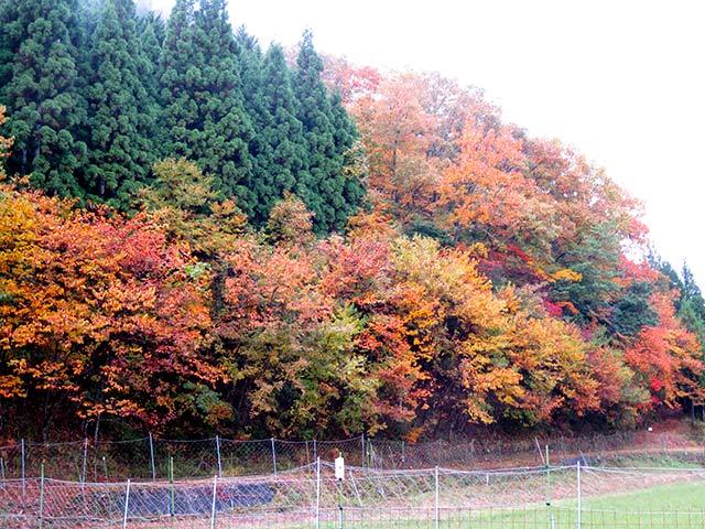 京北の紅葉の風景
