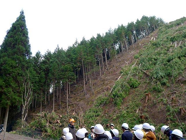 四辻木材の作業現場