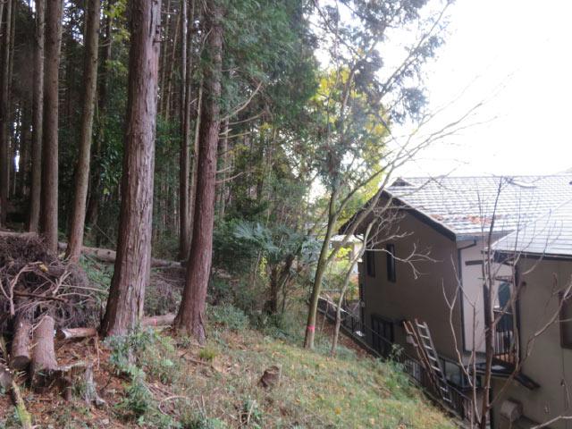 ご自宅の危険木の伐採前