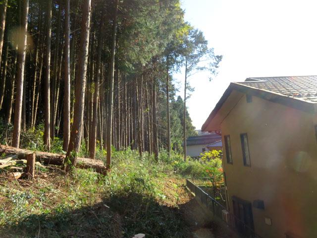 ご自宅の危険木の伐採後 すっきりして気持ちがいい
