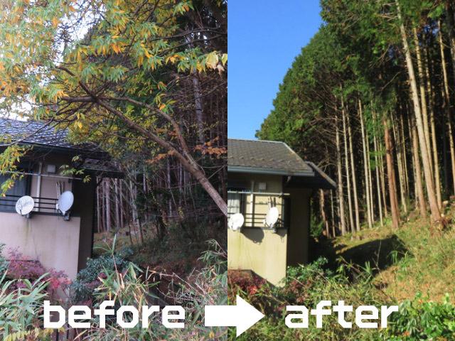 日当たりの悪かったお家も、木の手入れ次第でスッキリ!明るく過ごせます<危険木の事例>