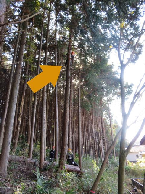 木に登って枝を切る