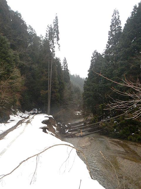 雪の重みで、木は倒れます
