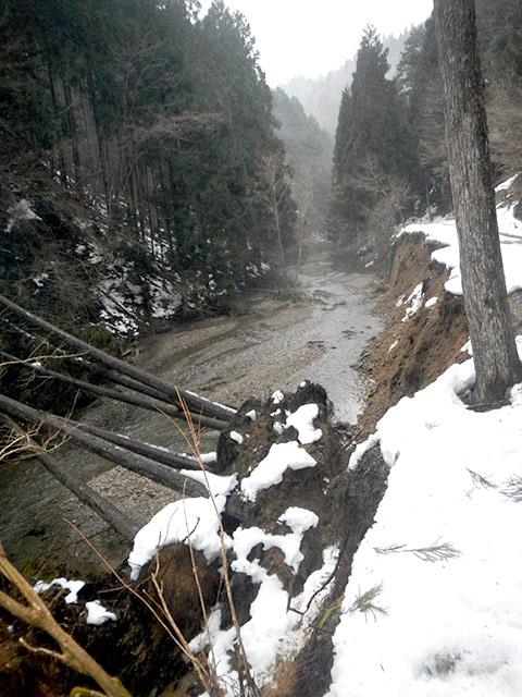 雪の重みで木が根元から堀起こされる