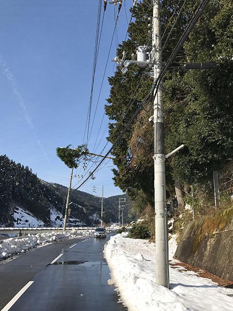 折れて高圧電線に乗ってしまった杉