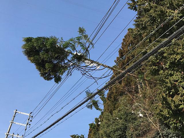 京北の各地で倒木で電線が切れてしまった