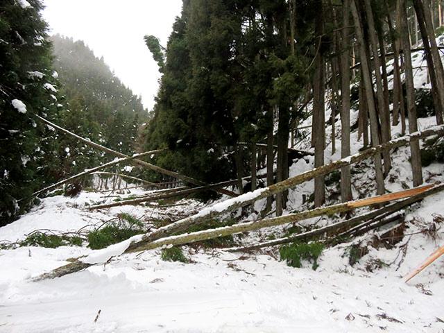 山の木が折れ、道を塞いでしまい、現場にいけない状態