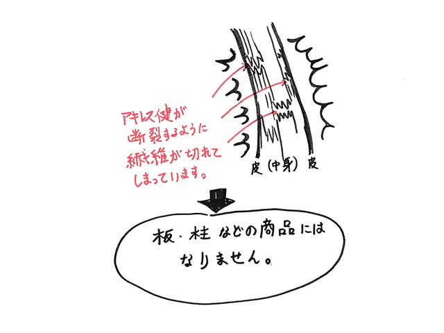 アキレス腱が断裂するように、木の繊維が切れてしまう図