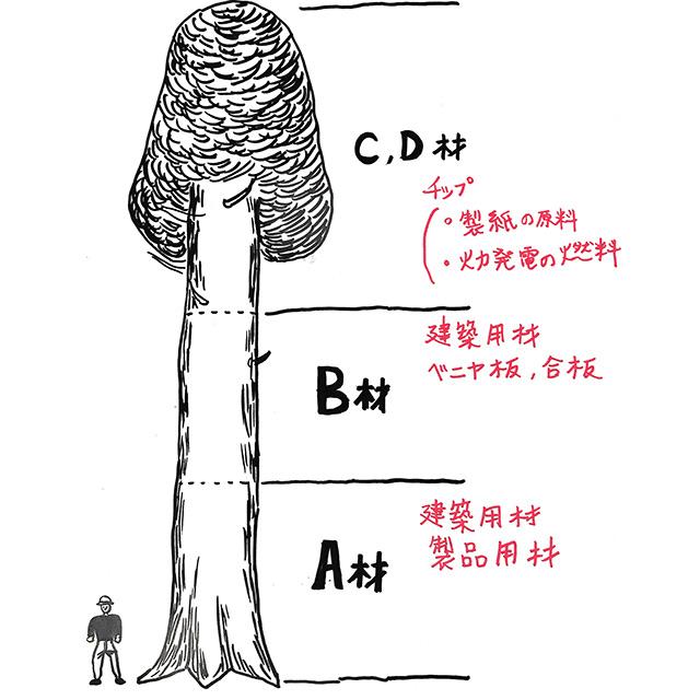木はこの図のA材の部分で商品価値を決める
