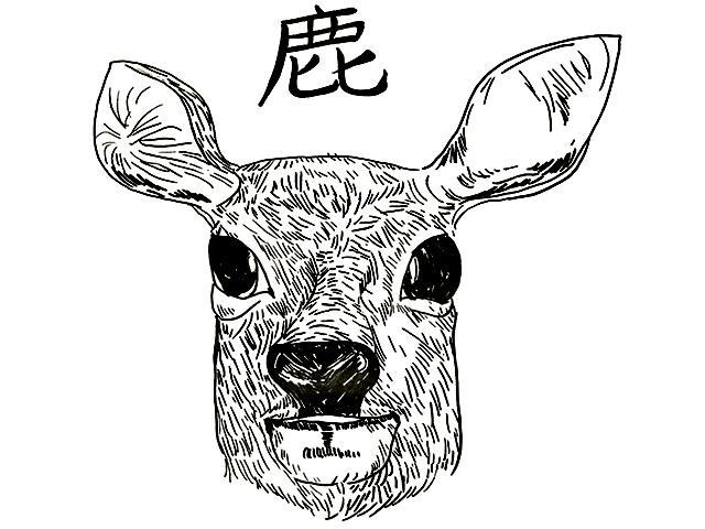 見た目は可愛い鹿さんですが、私たちにとっては迷惑なことしかありません