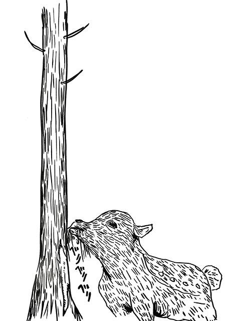 鹿も木の皮を剥ぐんです