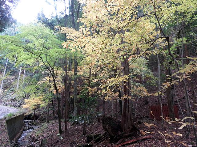 広葉樹が生えている俗に言う雑木林