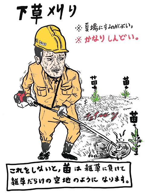 下草を刈る