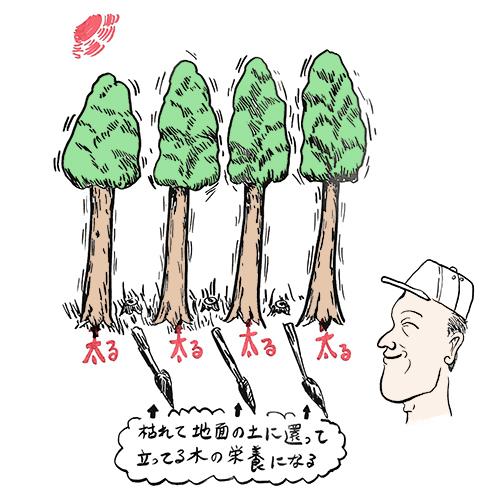 間伐の解説図