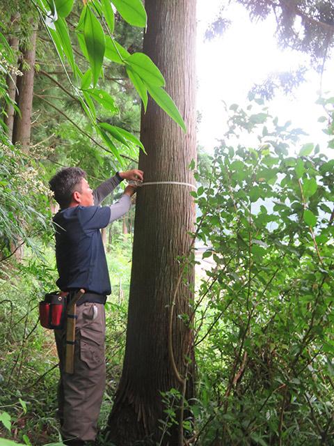 私たちは山にある木を一本一本手作業で測って、体積をだしてお見積もりします