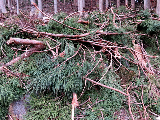 林地残材とは、枝、葉、端材のこと