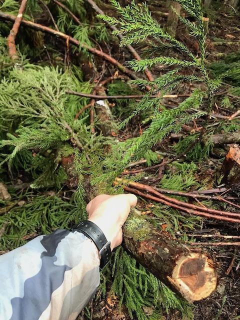 林地残材とは伐採した木の葉の部分など
