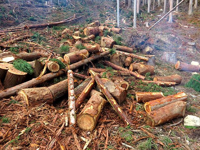 林地残材とは端材(通称:タンコロ)の部分