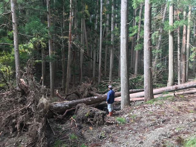 木は倒れてしまったらどうすることもできません。