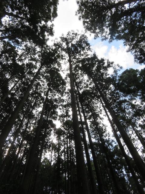 木を植えはった人は、その山主さんのおじいさんやその先祖の人たち