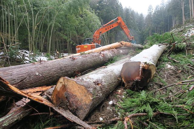 山から木を伐採して出してくるには、機械の力が必要です