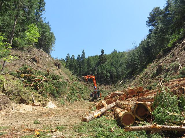 日本の全産業の中で、特に事故や怪我が多い林業。