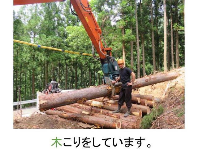 京都の木こり四辻木材私の仕事は、木こりをしています。