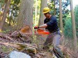いまだに「木を伐ることは自然破壊だ!」とか言ってるの?