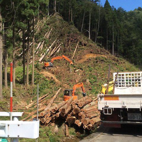 【京都府南丹市美山町】山林の調査と立木の伐採・搬出作業(1)