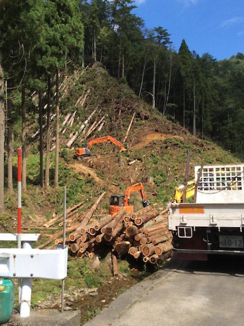 京都府南丹市美山町の山林の調査と立木の伐採・搬出作業
