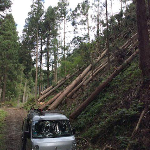 【京都府南丹市美山町鶴ケ岡】山林の調査と立木の伐採・搬出作業(2)