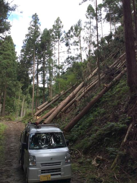 【京都府南丹市美山町鶴ケ岡】山林の調査と立木の伐採・搬出作業