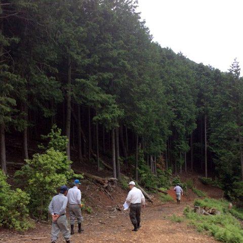 【京都府京都市京北山国町稲荷谷】山林の調査と立木の伐採・搬出作業(3)